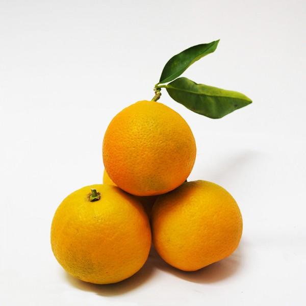 Πορτοκάλια Γλυκά
