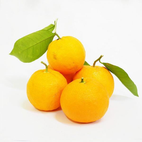 Πορτοκάλια Κοινά